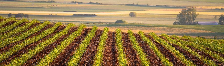 Lohnt es sich in ein Ackerland Rumänien zu investieren?